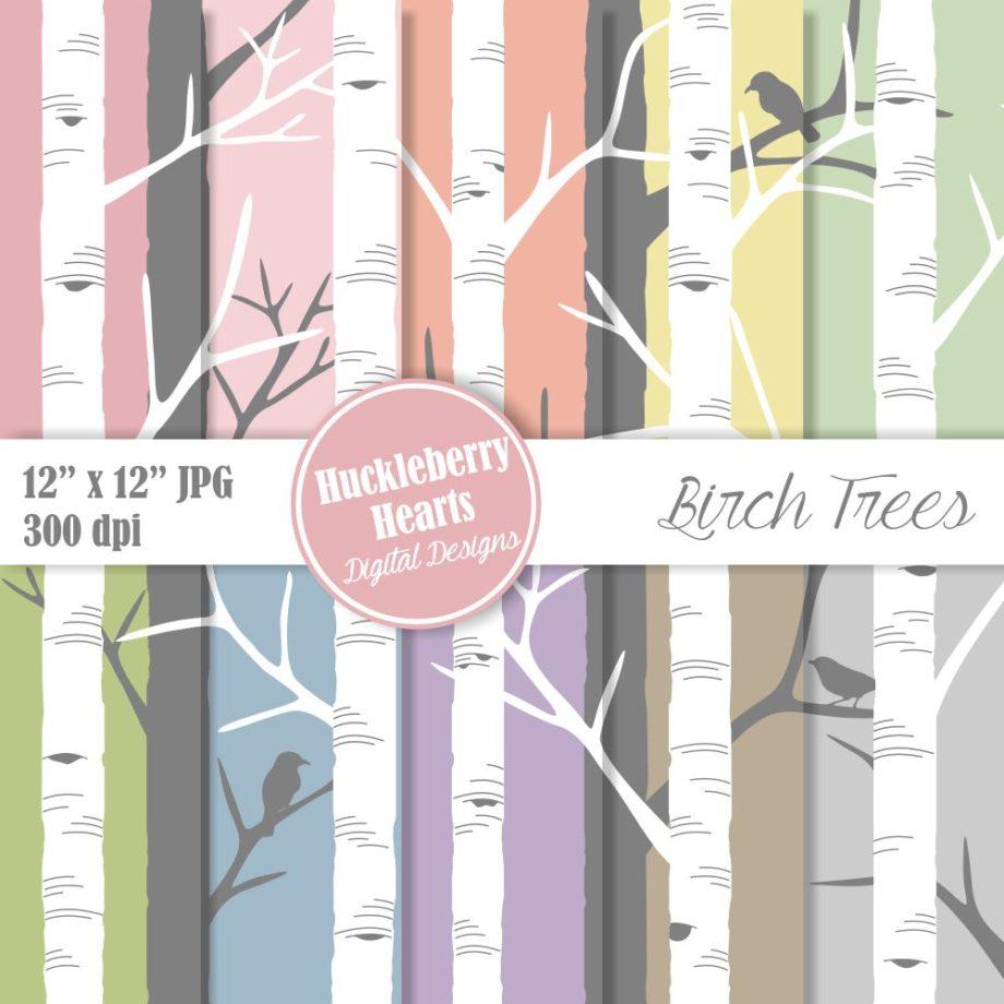Birch Trees Sample 1