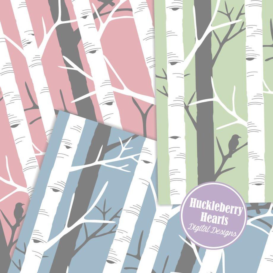 Birch Trees Sample 2